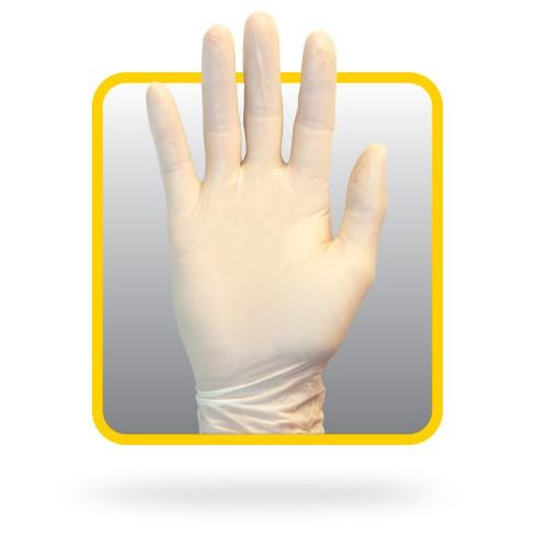 Latex Gloves, Powder Free - Medium